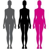 Θηλυκή διανυσματική απεικόνιση σκιαγραφιών ανατομίας σωμάτων ελεύθερη απεικόνιση δικαιώματος