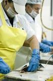 θηλυκή εργασία ψαριών κο&pi Στοκ Εικόνες