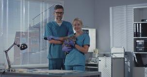 Θηλυκή κτηνιατρική γάτα εκμετάλλευσης απόθεμα βίντεο