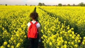Θηλυκή νέα γυναίκα εφήβων κοριτσιών αφροαμερικάνων που με το κόκκινο σακίδιο πλάτης στον τομέα των κίτρινων λουλουδιών συναπόσπορ απόθεμα βίντεο