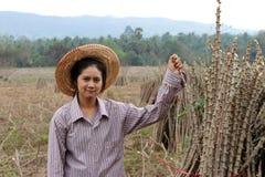 Θηλυκή συνεδρίαση αγροτών με το άκρο ταπιόκας που κόβει το σωρό μαζί στο αγρόκτημα στοκ εικόνες
