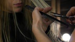Θηλυκή hairdresser do haircut κινηματογράφηση σε πρώτο πλάνο το τρίχωμα κουρευτών ζώων απομόνωσε το λευκό Hairstyle haircare και  απόθεμα βίντεο