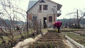 Θηλυκός αγρότης που φυτεύει τους σπόρους καρότων απόθεμα βίντεο