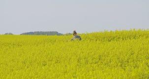 Θηλυκός ερευνητής που στέκεται στη μέση του άνθους βιασμών στον τομέα φιλμ μικρού μήκους