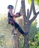 Θηλυκός χειρούργος δέντρων επάνω ένα δέντρο Στοκ εικόνες με δικαίωμα ελεύθερης χρήσης
