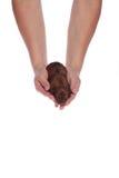 θηλυκό κουτάβι χεριών στοκ εικόνες