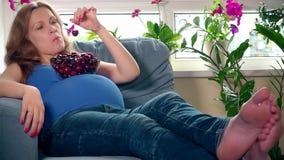 Θηλυκό με τη μεγάλη κοιλιά που τρώει το μούρο κερασιών απόθεμα βίντεο