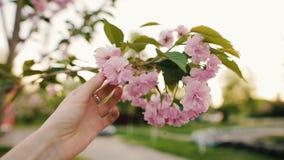 Θηλυκό χέρι σχετικά με τα ανθίζοντας λουλούδια sakura ή κεράσι στο πάρκο φιλμ μικρού μήκους