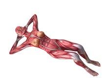 θηλυκό ABS workout Στοκ Εικόνες