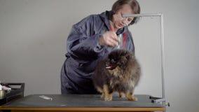 Θηλυκό groomer που κουρεύει το μικρό σκυλί Γυναίκα στο γκρίζο σακάκι που κάνει hairstyle για το σκοτεινό χνουδωτό κατοικίδιο ζώο  απόθεμα βίντεο