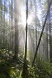 θηριοτροφείο ομίχλης Στοκ εικόνες με δικαίωμα ελεύθερης χρήσης
