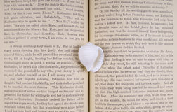 θησαυρός βιβλίων cowrie Στοκ εικόνες με δικαίωμα ελεύθερης χρήσης