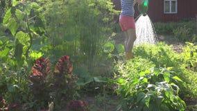 Θηλυκά λαχανικά κήπων νερού αγροτών ενάντια στο φως του ήλιου βραδιού 4K φιλμ μικρού μήκους
