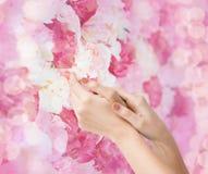 Θηλυκά μαλακά χέρια δερμάτων Στοκ Εικόνα