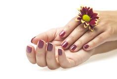 Θηλυκά χέρια και λουλούδι στο άσπρο υπόβαθρο στοκ εικόνες με δικαίωμα ελεύθερης χρήσης