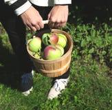 Θηλυκά χέρια που κρατούν το σύνολο καλαθιών των μήλων. Στοκ εικόνα με δικαίωμα ελεύθερης χρήσης