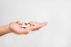 Θηλυκά όμορφα κοχύλια εκμετάλλευσης χεριών Στοκ φωτογραφία με δικαίωμα ελεύθερης χρήσης