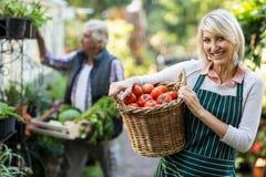 Θηλυκές φέρνοντας ντομάτες κηπουρών στο ψάθινο καλάθι Στοκ Εικόνες