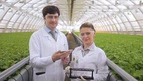 Θηλυκή αρσενική χημική δοκιμή συμπεριφοράς εργαστηριακών εργαζομένων των δειγμάτων εγκαταστάσεων απόθεμα βίντεο