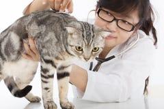 Θηλυκή κτηνιατρική να κάνει εξέταση μια χαριτωμένη γάτα στην κλινική Στοκ Εικόνα