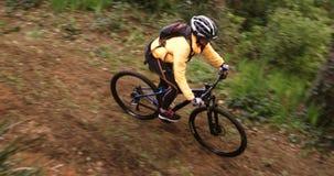 Θηλυκή οδήγηση ποδηλατών βουνών στο δάσος απόθεμα βίντεο