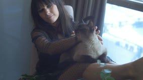 Θηλυκή συνεδρίαση Brunette με μια γάτα φιλμ μικρού μήκους