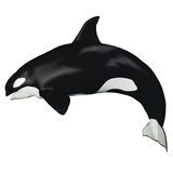 Θηλυκή φάλαινα Orca Στοκ εικόνες με δικαίωμα ελεύθερης χρήσης