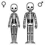 θηλυκοί αρσενικοί σκε&lam Στοκ εικόνες με δικαίωμα ελεύθερης χρήσης
