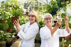 Θηλυκοί συνάδελφοι που χαμογελούν εξετάζοντας τις σε δοχείο εγκαταστάσεις Στοκ Εικόνα