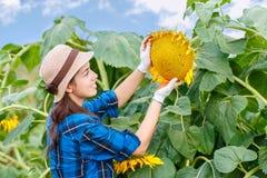 Θηλυκός αγρότης στον τομέα ηλίανθων Στοκ εικόνες με δικαίωμα ελεύθερης χρήσης