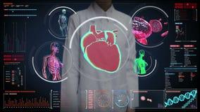 Θηλυκός γιατρός σχετικά με την ψηφιακή οθόνη, θηλυκό αιμοφόρο αγγείο ανίχνευσης σωμάτων, λεμφατικό, καρδιά, κυκλοφοριακό σύστημα
