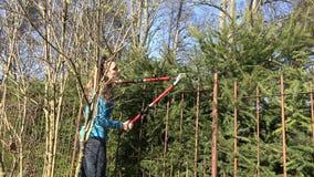Θηλυκός κηπουρών φράκτης δέντρων έλατου ατόμων τακτοποιώντας με τις κόκκινες ψαλίδες 4K απόθεμα βίντεο