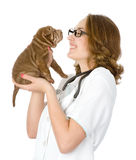 Θηλυκός κτηνίατρος που εξετάζει ένα σκυλί κουταβιών sharpei στοκ φωτογραφία