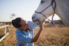 Θηλυκός κτηνίατρος που εξετάζει το στόμα αλόγων στοκ φωτογραφία