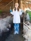 Θηλυκός κτηνίατρος στο χοιροστάσιο Στοκ Φωτογραφίες