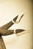 Θηλυκός χορευτής ποδιών στα παπούτσια μπαλέτου Στοκ Εικόνες