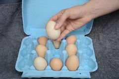 Θηλυκό πρότυπο που κρατά ένα αυγό Στοκ Εικόνα