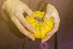 Θηλυκό στο πορφυρό πουλόβερ που κρατά την κίτρινη κολοκύθα Στοκ Φωτογραφία