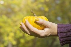 Θηλυκό χέρι που κρατά την κίτρινη κολοκύθα υπαίθρια Στοκ φωτογραφία με δικαίωμα ελεύθερης χρήσης