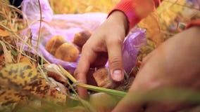 Θηλυκό χέρι που κόβει ένα άγριο μανιτάρι με ένα μαχαίρι απόθεμα βίντεο