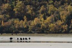 ΘΙΒΕΤ - Ranwuhu - Niyang - φθινόπωρο Στοκ Φωτογραφίες