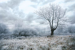 θλιβερός χειμώνας ημέρας στοκ εικόνα με δικαίωμα ελεύθερης χρήσης