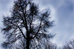 θλιβερό δέντρο Στοκ φωτογραφίες με δικαίωμα ελεύθερης χρήσης