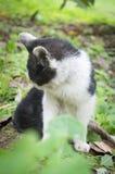 Θλιβερό περιπλανώμενο γατάκι Στοκ Φωτογραφίες