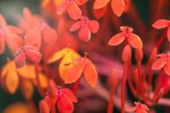Θολωμένα μικρά κόκκινα λουλούδια με το bokeh Στοκ εικόνα με δικαίωμα ελεύθερης χρήσης