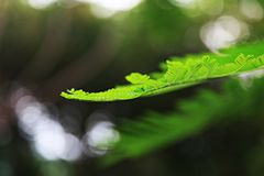Θολωμένα πράσινα φύλλα και bokeh υπόβαθρο Στοκ φωτογραφίες με δικαίωμα ελεύθερης χρήσης
