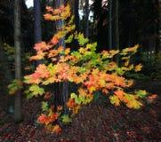 Θολωμένα φύλλα φθινοπώρου Στοκ φωτογραφία με δικαίωμα ελεύθερης χρήσης