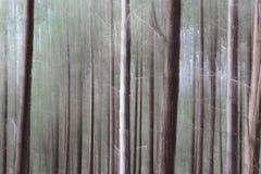 θολωμένη δασώδης περιοχή Στοκ φωτογραφίες με δικαίωμα ελεύθερης χρήσης
