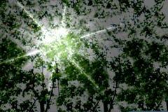 Θολωμένη περίληψη εικόνα του πράσινου υποβάθρου φυλλώματος δέντρων Στοκ Φωτογραφία
