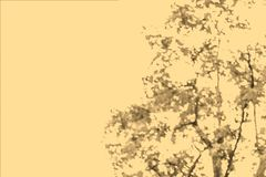 Θολωμένη περίληψη εικόνα του πράσινου υποβάθρου φυλλώματος με παλαιό Στοκ Εικόνα